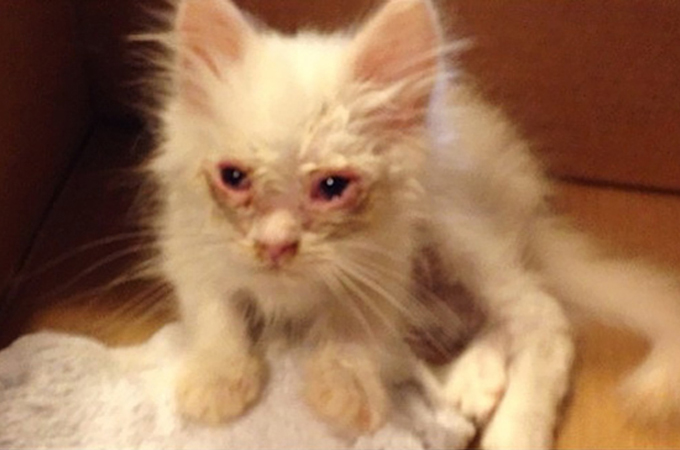 ホームレス子猫があたたかい家族に引き取られ生まれかわる