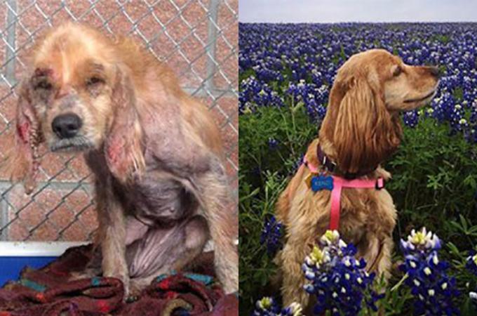 一度は捨てられた犬たちが笑顔を取り戻したビフォー・アフター