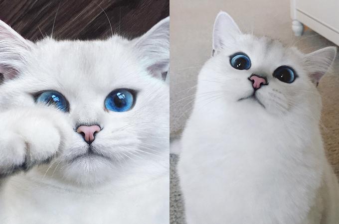 青く透きとおった瞳を持つ猫が美しいと話題の画像17選