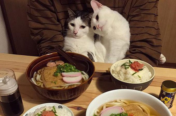 バレンタインに告白!恋する猫たちの思わずキュンとする癒し画像集