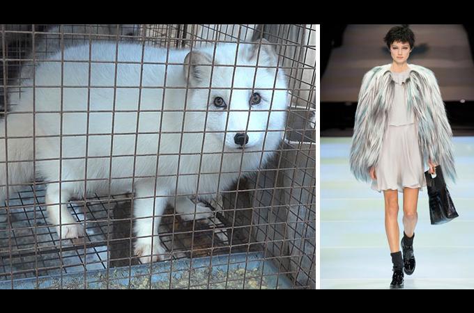 高級ファッションブランドの代名詞「アルマーニ」が毛皮の使用を廃止