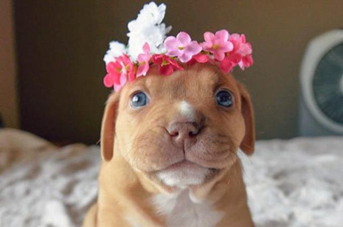 愛犬に感謝する「National Puppy Day」が素晴らしい
