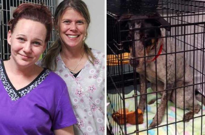 炎の中に閉じ込められた15匹の犬たちを命がけで救った獣医たち