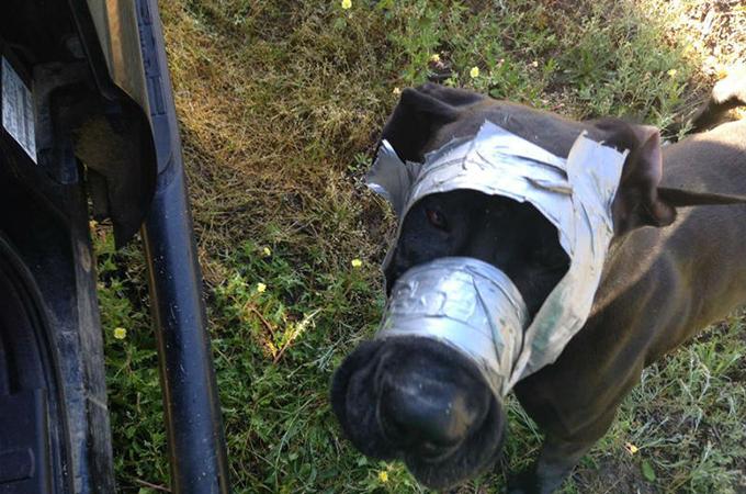 口や顔をテープでぐるぐる巻きにされた犬が発見される