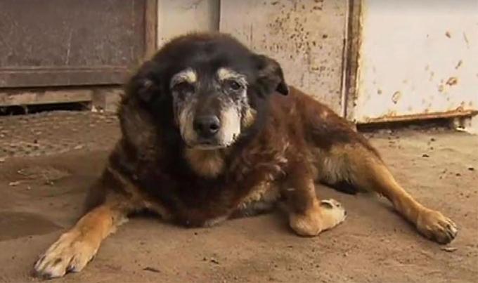 30歳という世界最高齢のおばあちゃん犬「マギー」が天国へ