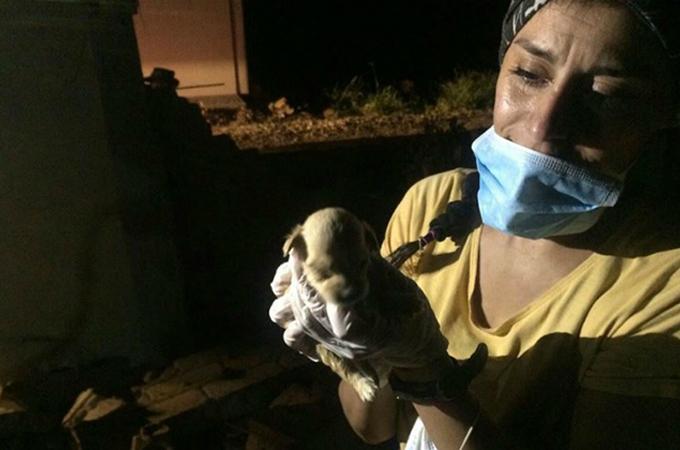 大地震の瓦礫の中から子犬の鳴き声が!生命の奇跡が人々に希望を与える
