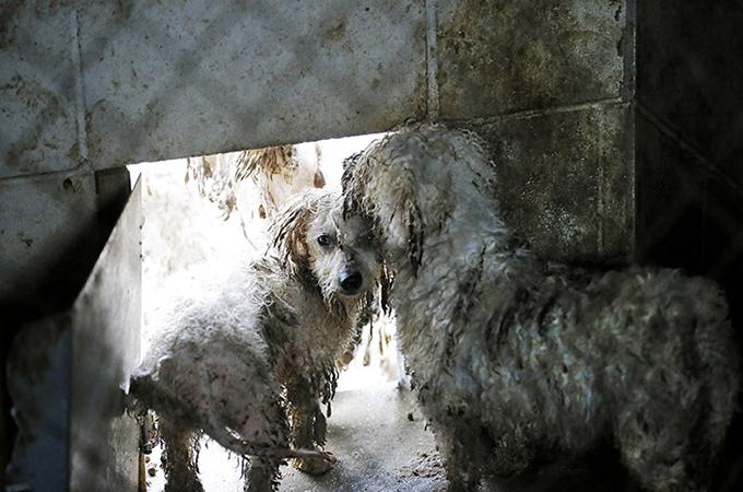 パピーミルという嘆かわしい状況下で過ごした犬たちが二度目の生きるチャンスを得る