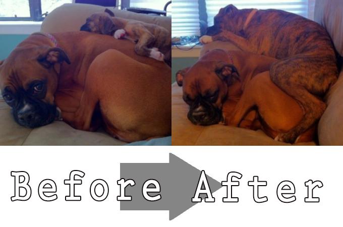 あっという間に成長した犬、猫のBefore・After画像