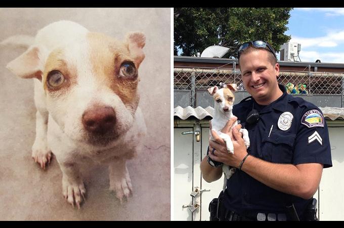 犬からも薬物反応が!麻薬捜査により逮捕された男によっての虐待か!?