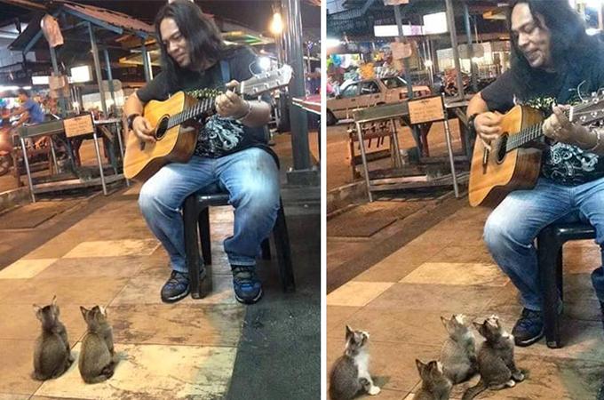 ストリートミュージシャンの熱狂的なファンは4匹の可愛い子猫たち