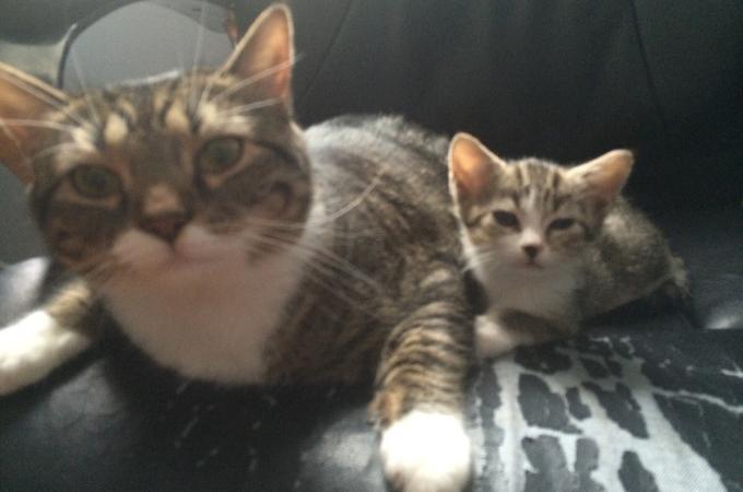 保護施設にいた母猫と子猫。引き取られ、その後の暮らし