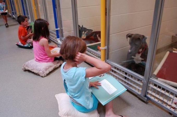 子供達がシェルターで暮らす犬たちに絵本を読みかせ!少しづつ心を開き興味を持つ!