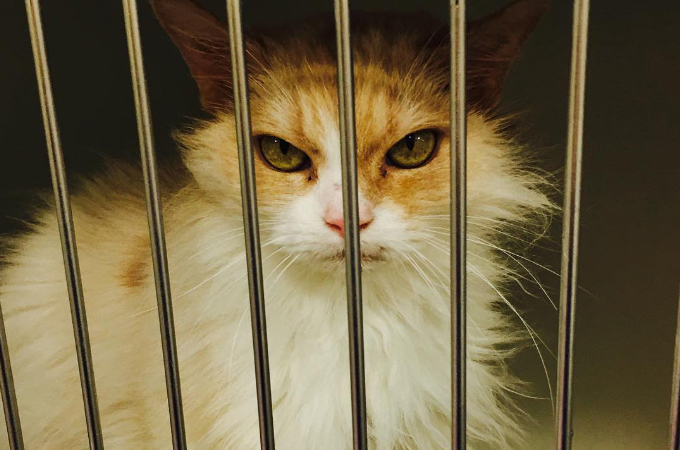 長い間引き取り手の見つからなかった目つきの悪い猫と出会う1人の女性