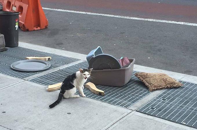 自分の持ち物と一緒に路上に捨てられ、悲しげな声で鳴く1匹の猫