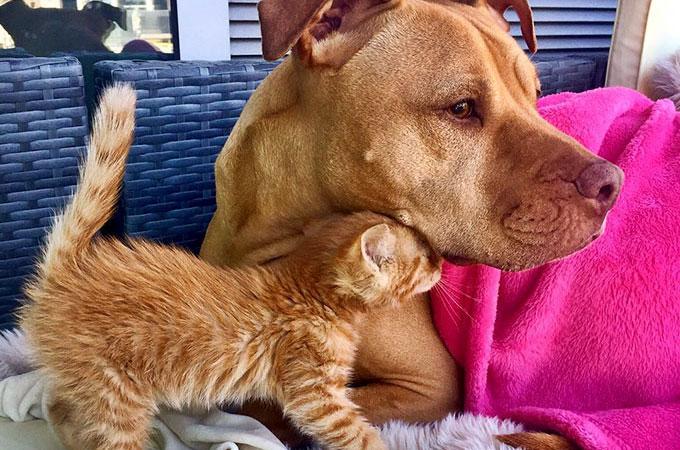 子猫をまるで自分の娘のように愛して可愛がる保護犬の姿が素敵と話題に