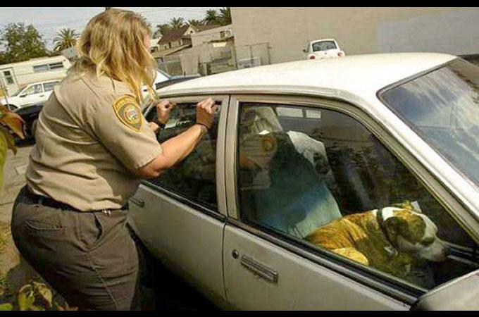 車に閉じ込められたペットを救うため車の窓ガラスを破壊することが合法に