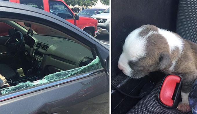助けるためなら何でもします!車のガラスを壊し子犬を救出した警察官