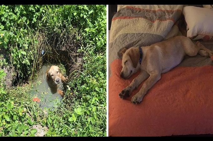浄化槽排水の中に閉じ込められ悲しい目で助けを求める子犬