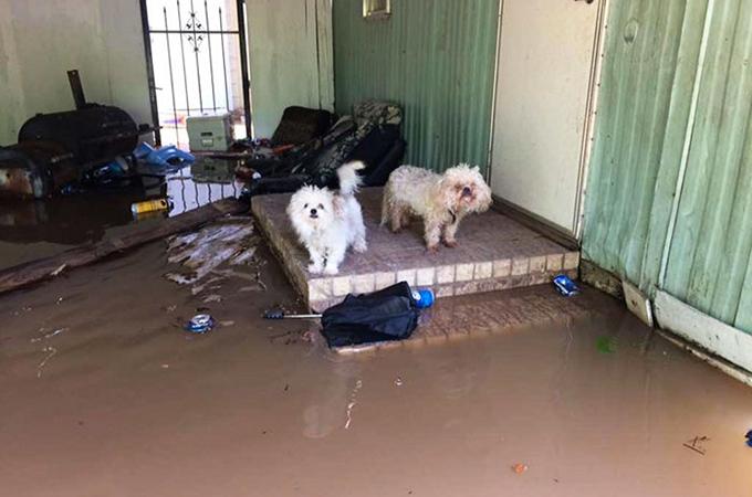 大洪水発生後、避難指示を守らず多くの人たちが愛犬を置き去りに
