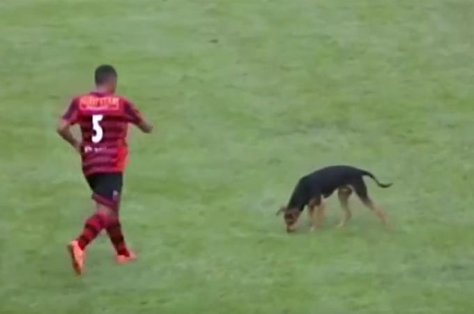 大切な試合に突如現れた1匹の迷子犬。選手のとった行動にサポーターからは歓声が!