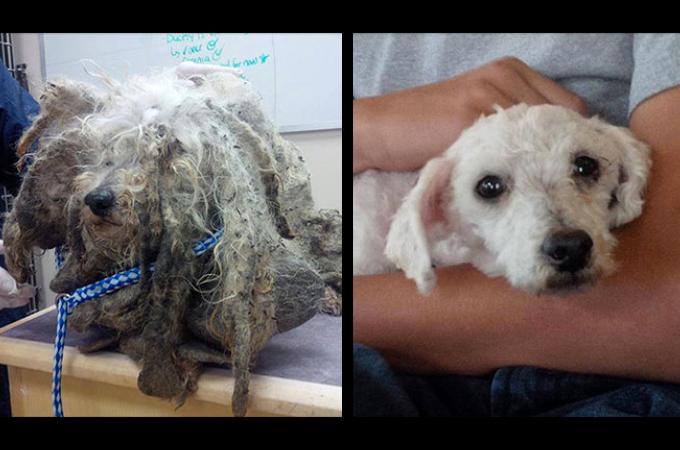 飼育放棄などで保護された犬の生まれ変わった姿に考えさせられる