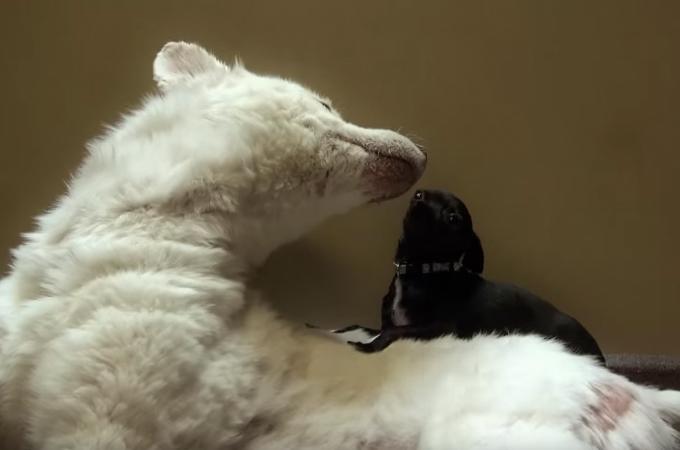 別々の場所で保護された2匹。保護施設で出会い互いの傷と心を癒し合う