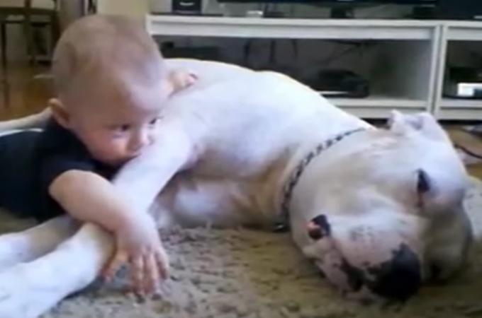 お昼寝モードのワンコに近づく赤ちゃん。その後のワンコの行動に思わずほっこり!