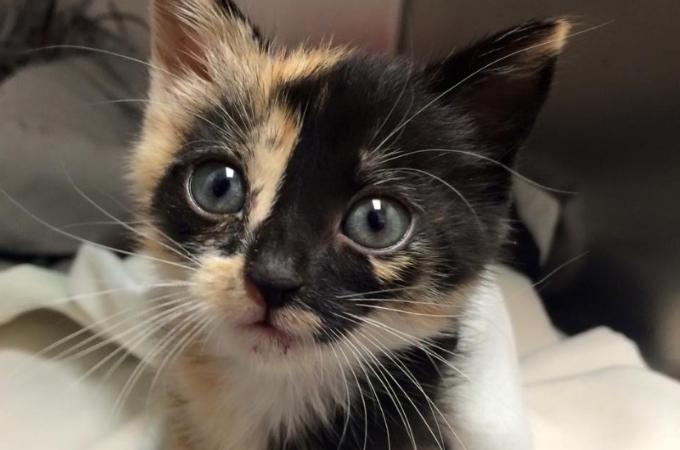 ゴミ収集車で運ばれてしまうところだった子猫。清掃員が気付き無事に保護される