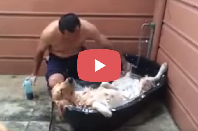 【動画】世界一!?誰よりもお風呂でリラックスするワンコ。