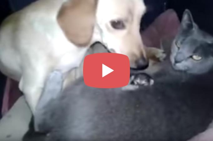 【動画】子育て中の犬小屋に猫家族登場でまさかのシェアハウス!
