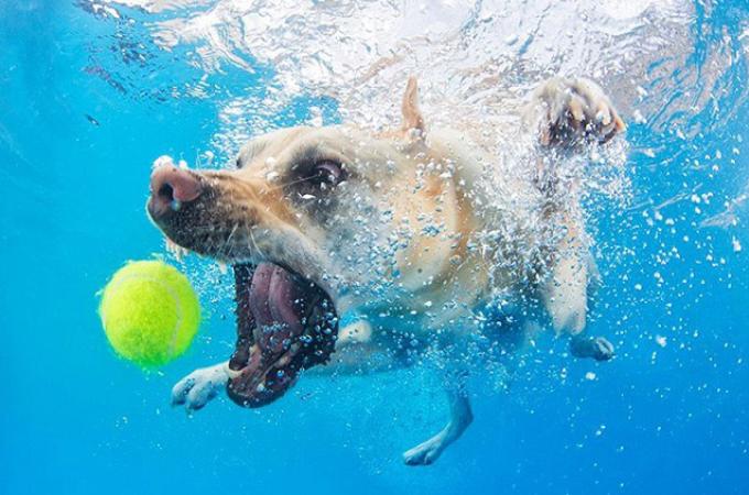 【画像】普段は可愛らしいワンコが水中ではこんな表情に!10枚