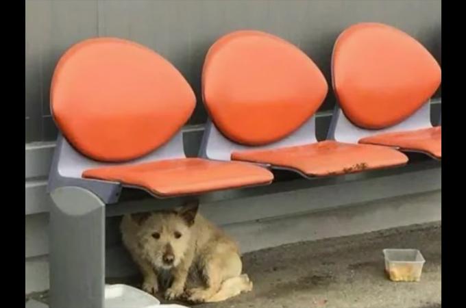 寒い冬に駐車場で発見された1匹の犬。無事に保護されその後元気な姿を取り戻す
