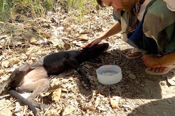 野良犬の保護のため捜索中、別の黒いやつれた犬が発見され保護される