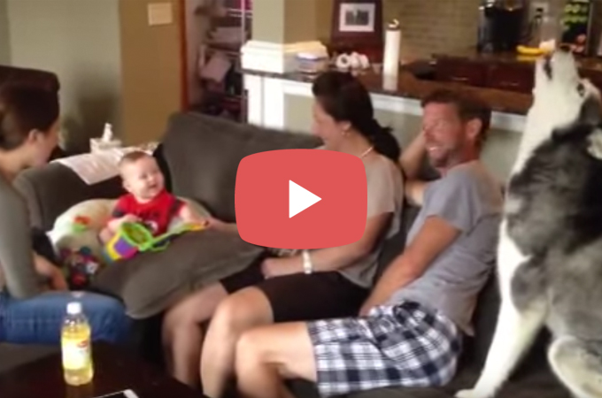 【動画】遠吠えに喜ぶ赤ちゃん。その笑顔に何度も遠吠えを披露するハスキー犬