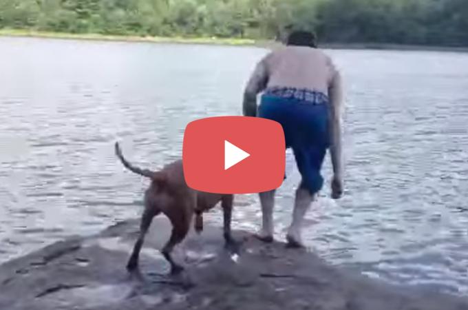 【動画】湖に飛び込んだ飼い主さん!落ちたと勘違いしたピット・ブルがとった行動とは