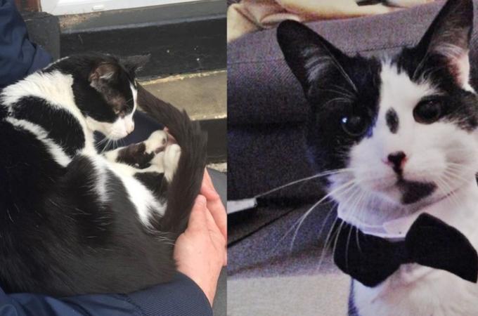 飼い主に見捨てられた猫。その後、引っ越してきた素敵な男性と巡り会い幸せを手にいれる