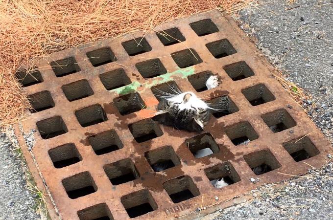 溝にはまって抜けなくなってしまった猫。駆けつけた消防隊員により無事救出