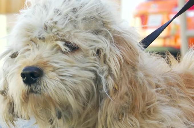 引き取り手のなかなか見つからなかった犬をトリマーがカット。その結果