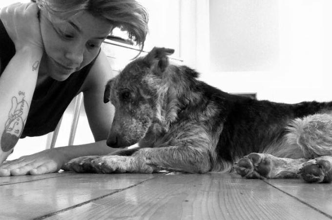 「汚くていらないから殺処分してくれ」と飼い主に捨てられた犬。苦しみと悲しみを乗り越え幸せを手にする