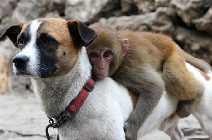 異なる種の友情は存在する!そう思わせてくれる動物たちの画像