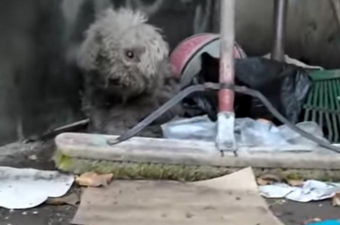 自分を守るためにゴミ溜めに住む盲目の犬。無事に保護され奇跡が起こる