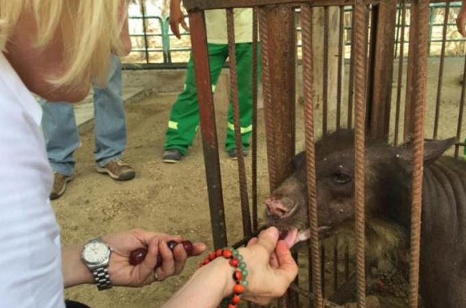 20年間サーカスに飼われ虐待されたクマが保護される
