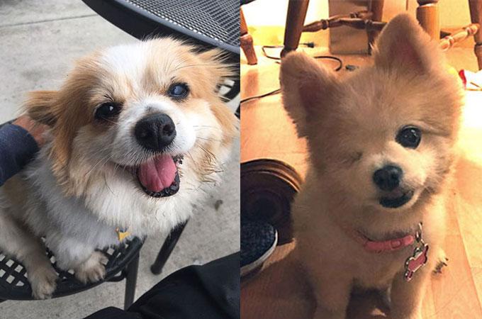 引き取り手が見つかりにくいシニア犬が笑顔で新しい人生を歩みだす!
