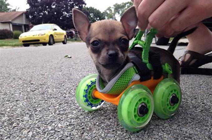 飼い主さんの愛犬への愛情がとても感じられる素晴らしい発明品の数々
