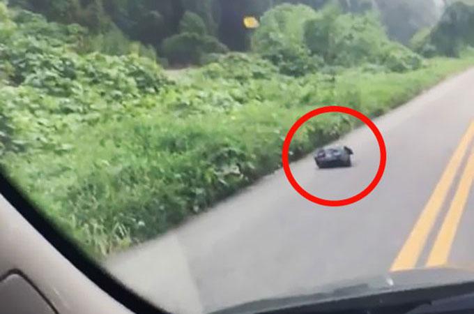 道路上でうごめく黒いゴミ袋!中には首輪をつけた1匹の子犬が