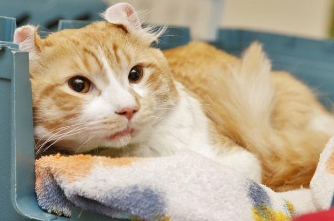 高速道路に取り残されレスキュー隊からも救出されなかった猫が優しい男性に救われる
