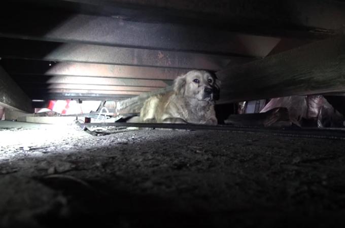 暗く狭い場所で孤独に暮らしていた犬。動物保護団体の職員が諦めることなく接した結果、無事に救出される