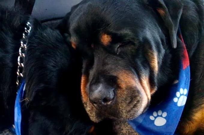 亡くなった兄弟犬のそばを離れようとしない犬の姿に思わず涙
