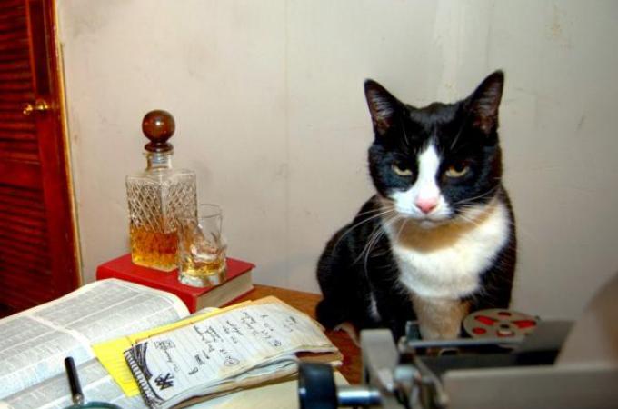 【画像】作業中に何食わぬ顔で邪魔をしてくる猫画像11選