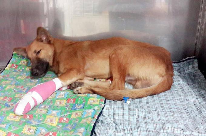 隣人の敷地内に入り、落ちていた靴を噛んだことで家主が激昂し両足を切断された犬。